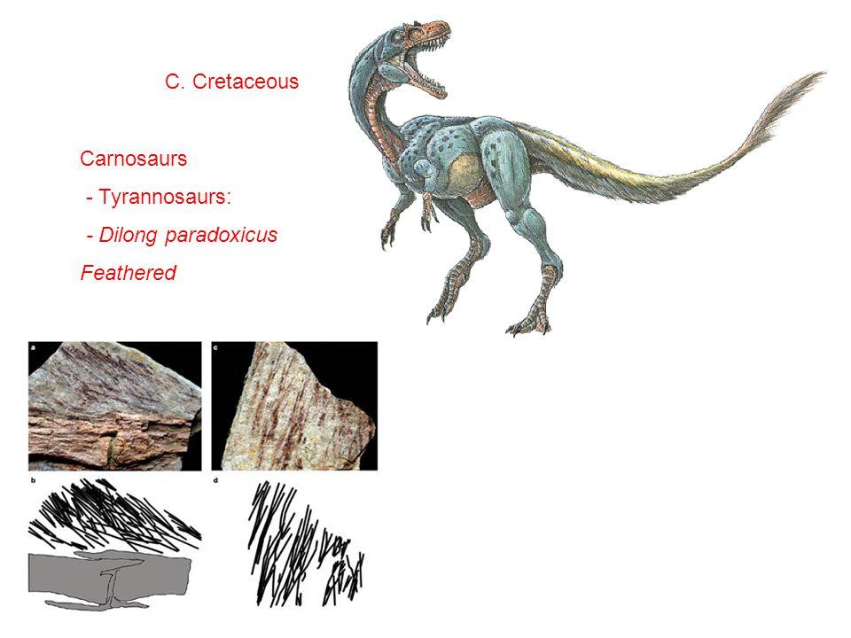 C. Cretaceous Carnosaurs - Tyrannosaurs: - Dilong paradoxicus Feathered