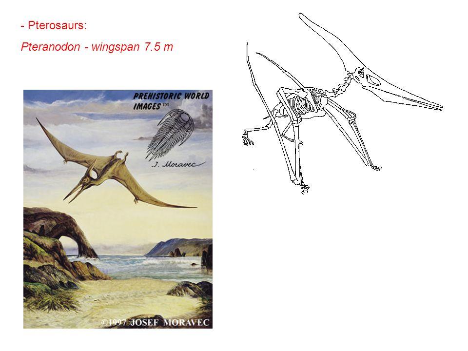 Pteranodon - wingspan 7.5 m