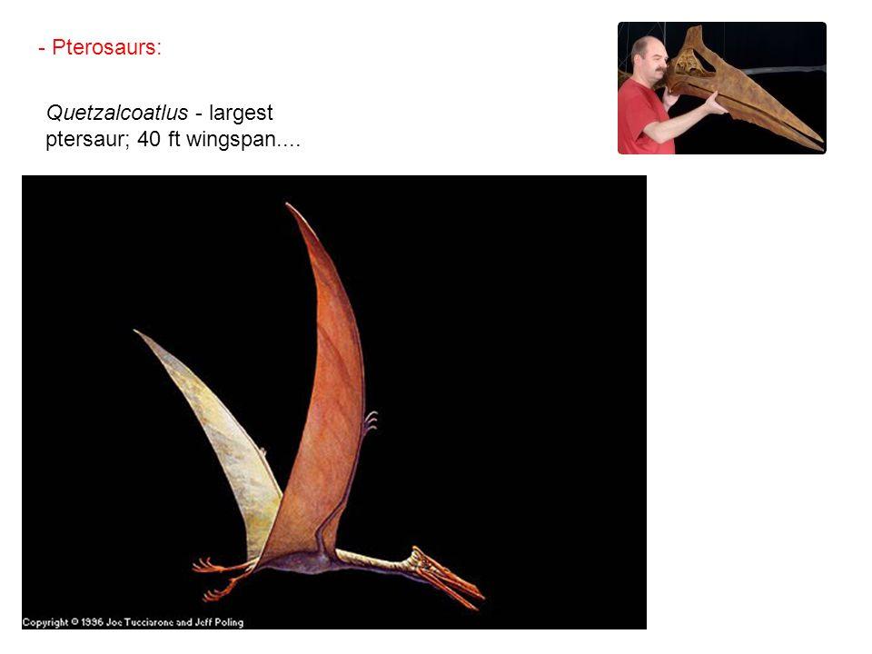 - Pterosaurs: Quetzalcoatlus - largest ptersaur; 40 ft wingspan....