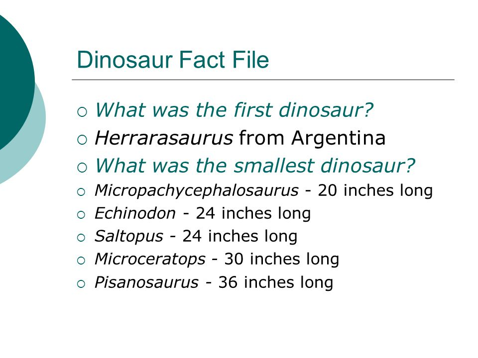 Dinosaur Fact File  What was the first dinosaur?  Herrarasaurus from Argentina  What was the smallest dinosaur?  Micropachycephalosaurus - 20 inch