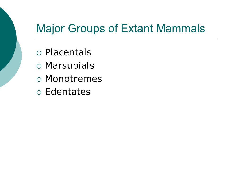 Major Groups of Extant Mammals  Placentals  Marsupials  Monotremes  Edentates
