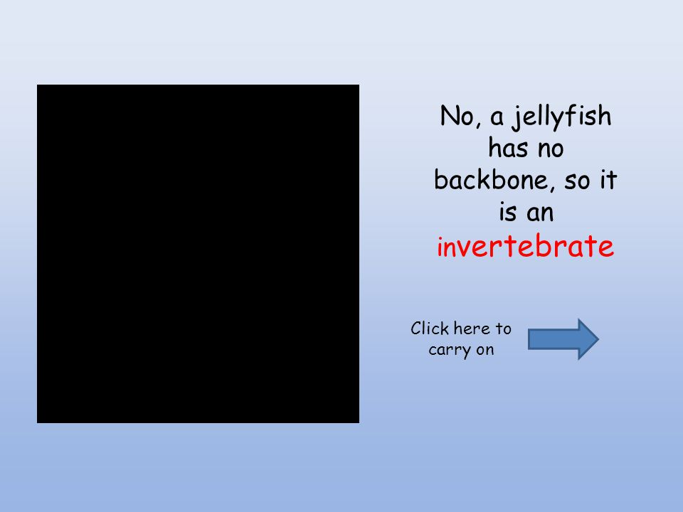 No, a jellyfish has no backbone, so it is an in vertebrate Click here to carry on