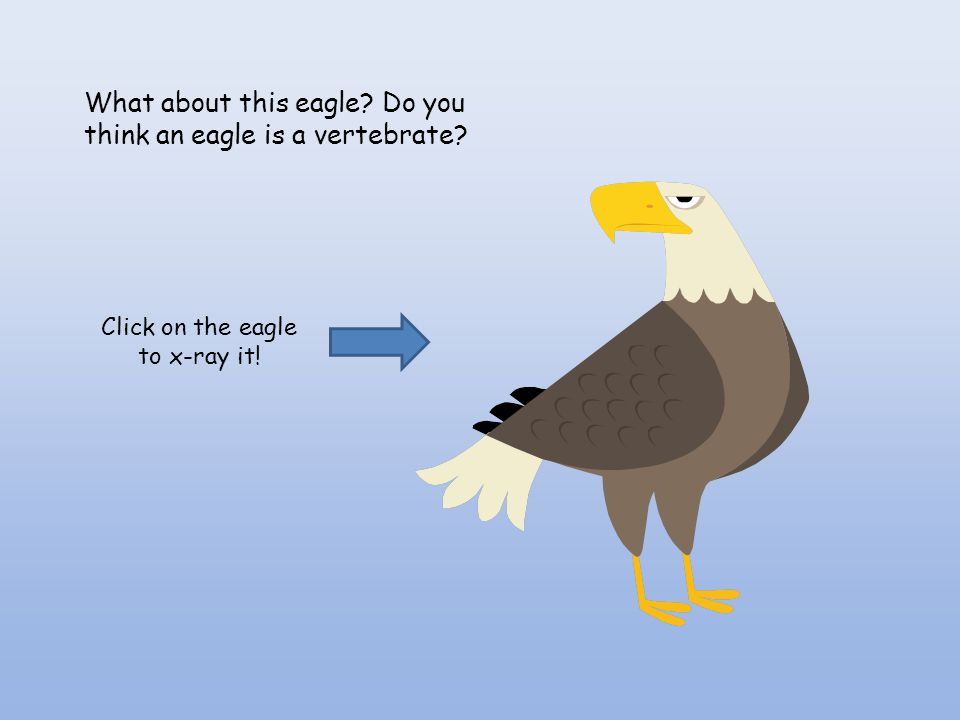 What about this eagle? Do you think an eagle is a vertebrate? Click on the eagle to x-ray it!