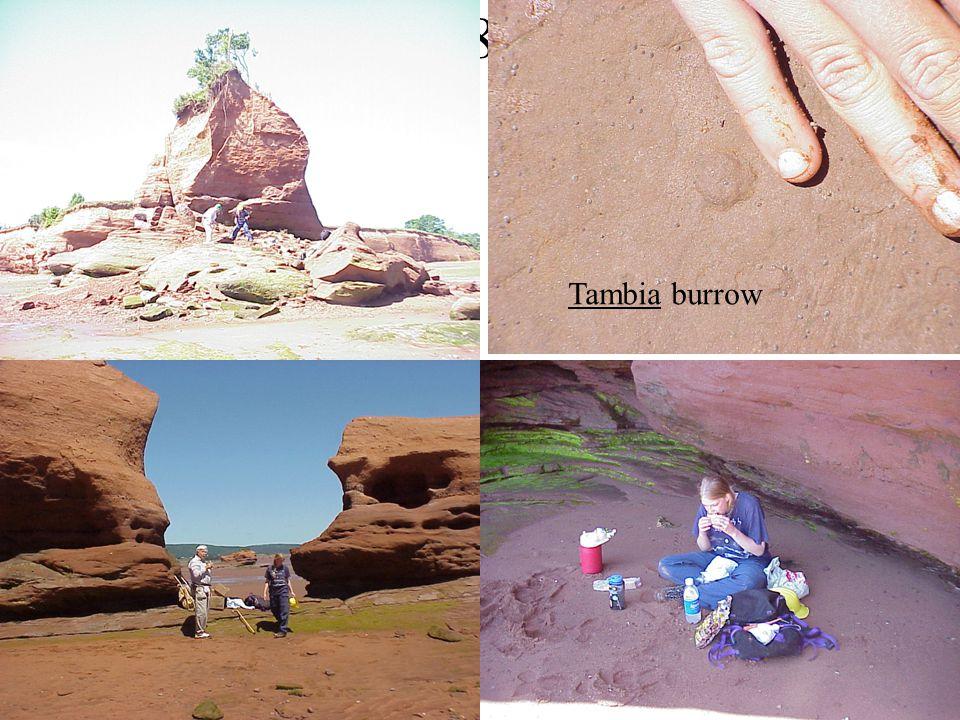 (6/28/01) Tambia burrow