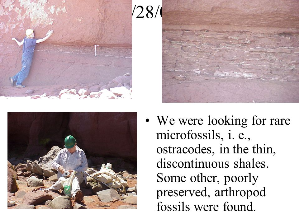 We were looking for rare microfossils, i.e., ostracodes, in the thin, discontinuous shales.