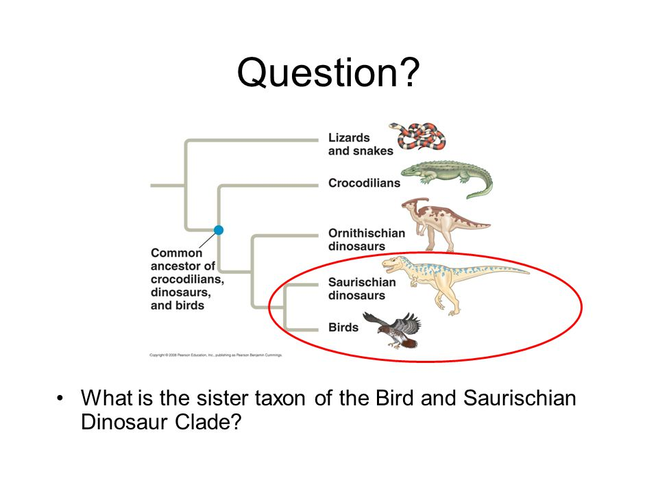Question? What is the sister taxon of the Bird and Saurischian Dinosaur Clade?