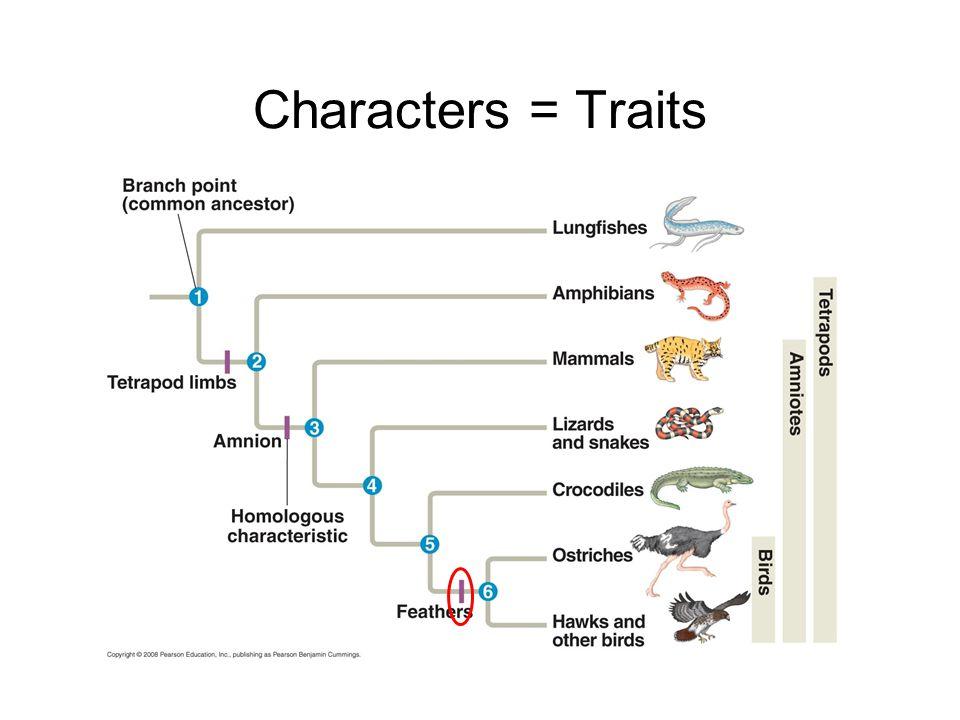 Characters = Traits
