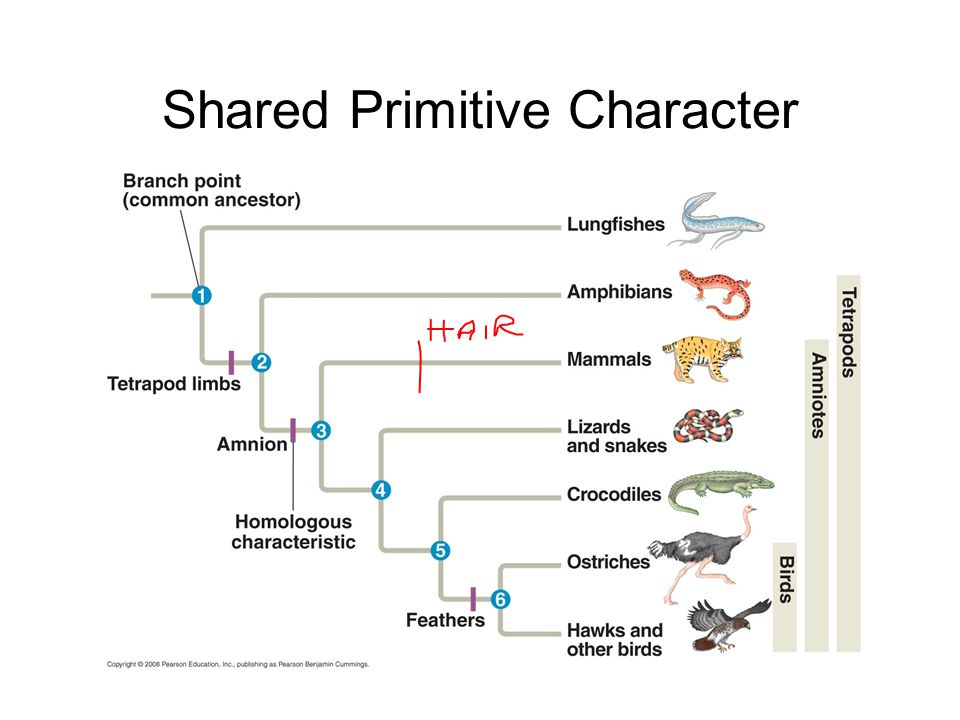 Shared Primitive Character