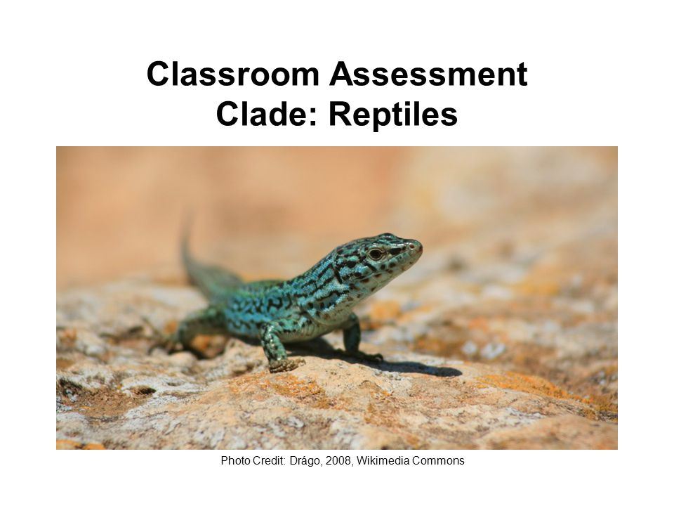 Classroom Assessment Clade: Reptiles Photo Credit: Drágo, 2008, Wikimedia Commons