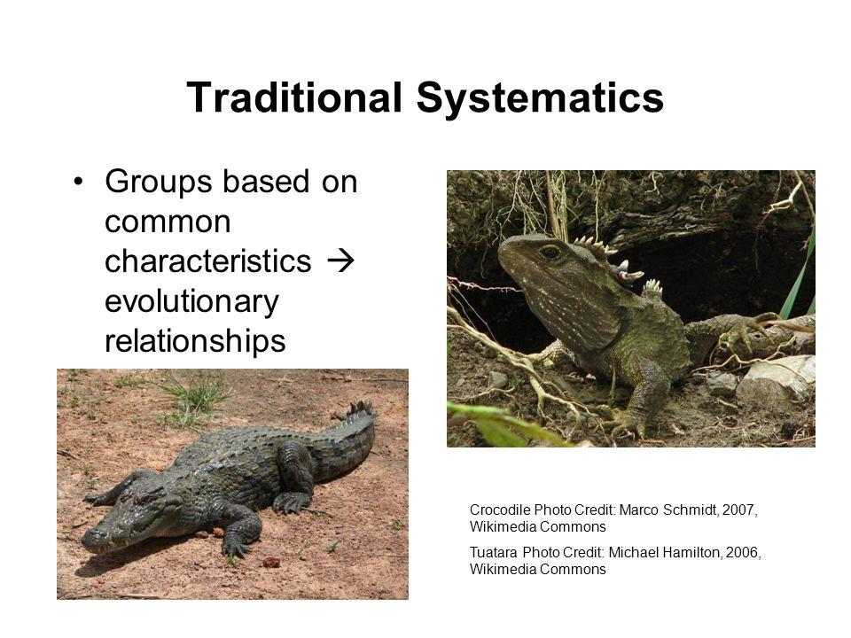 Traditional Systematics Groups based on common characteristics  evolutionary relationships Crocodile Photo Credit: Marco Schmidt, 2007, Wikimedia Commons Tuatara Photo Credit: Michael Hamilton, 2006, Wikimedia Commons