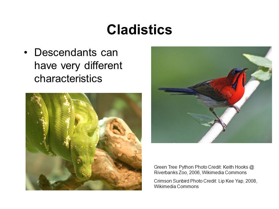 Cladistics Descendants can have very different characteristics Green Tree Python Photo Credit: Keith Hooks @ Riverbanks Zoo, 2006, Wikimedia Commons Crimson Sunbird Photo Credit: Lip Kee Yap, 2008, Wikimedia Commons