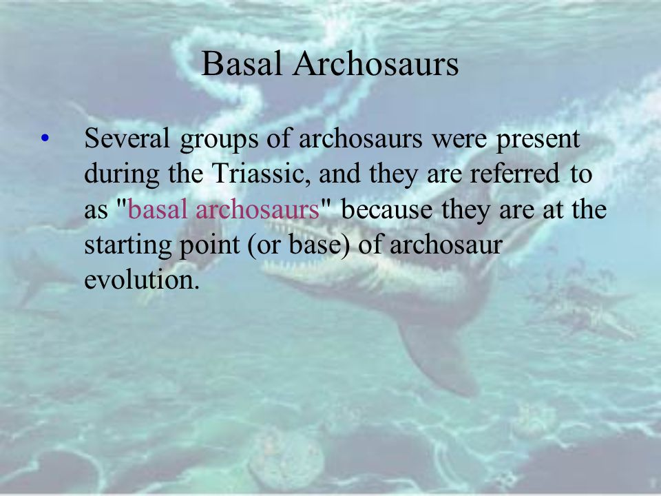 Basal Archosaurs Several groups of archosaurs were present during the Triassic, and they are referred to as basal archosaurs because they are at the starting point (or base) of archosaur evolution.