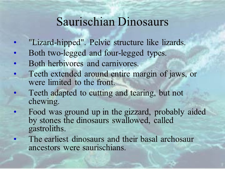 Saurischian Dinosaurs Lizard-hipped .Pelvic structure like lizards.