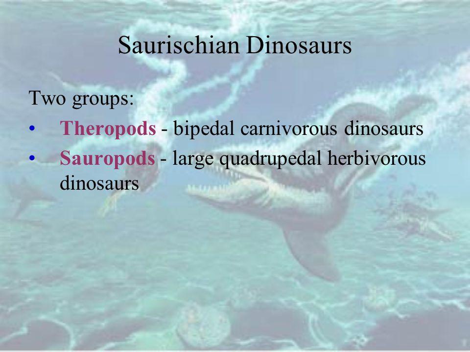 Saurischian Dinosaurs Two groups: Theropods - bipedal carnivorous dinosaurs Sauropods - large quadrupedal herbivorous dinosaurs
