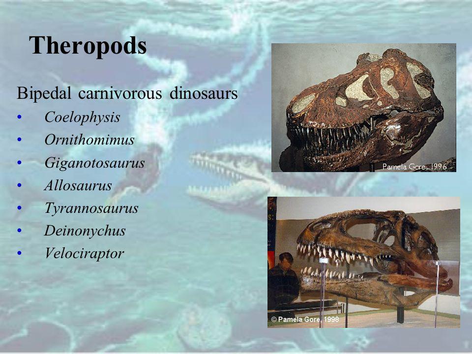 Theropods Bipedal carnivorous dinosaurs Coelophysis Ornithomimus Giganotosaurus Allosaurus Tyrannosaurus Deinonychus Velociraptor