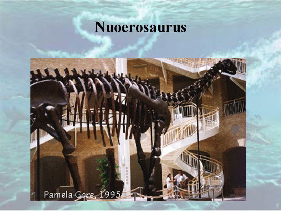 Nuoerosaurus
