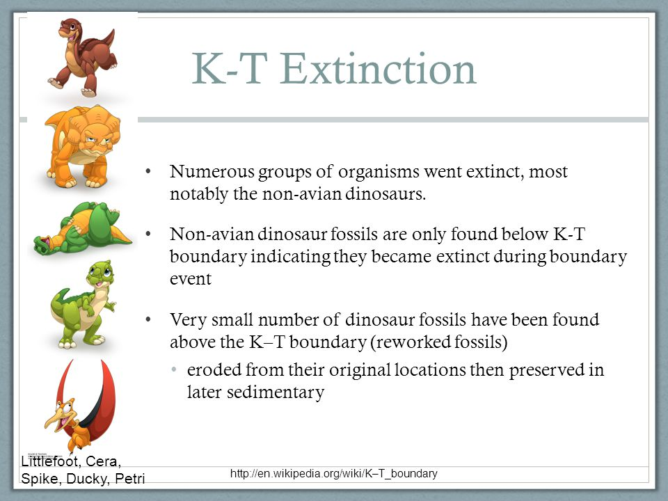K-T Extinction Numerous groups of organisms went extinct, most notably the non-avian dinosaurs. Non-avian dinosaur fossils are only found below K-T bo