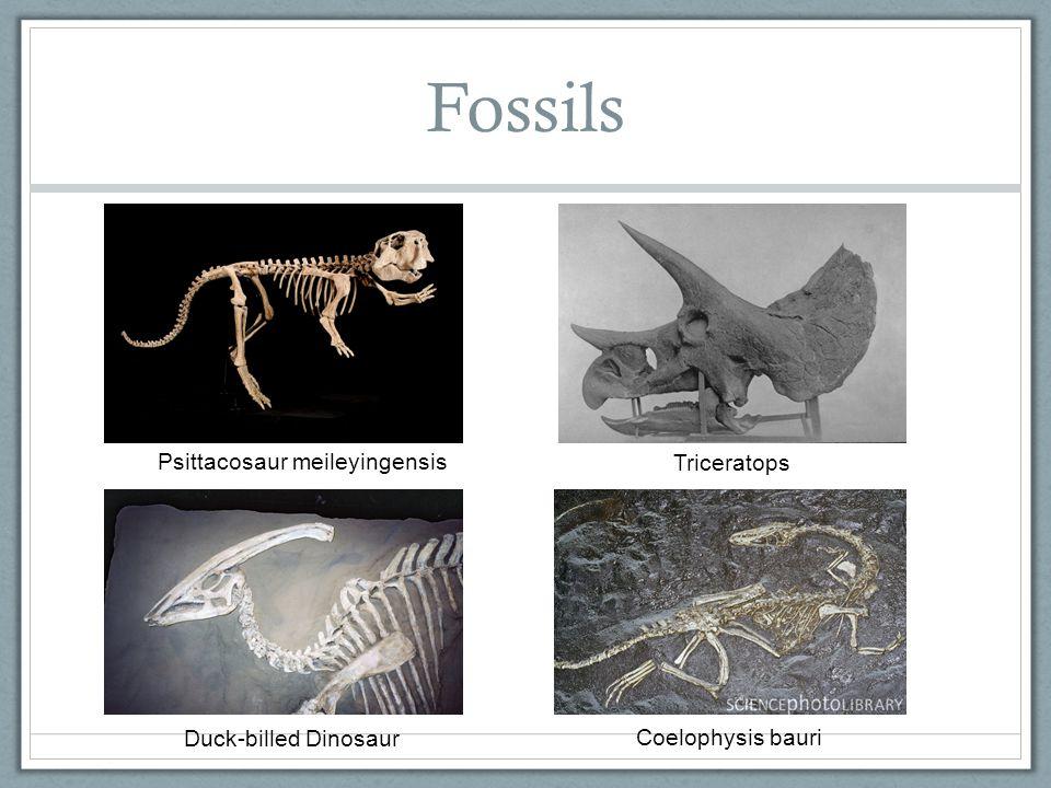 The T-Rex http://www.youtube.com/watch?v=PSI8nP0m24M http://www.popcrunch.com/wp-content/uploads/2011/05/t-rex-jurassic-park-500x301.jpg