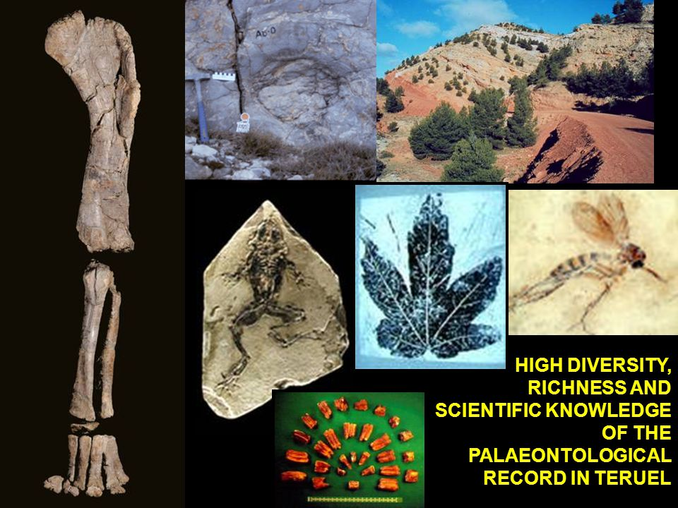 HIGH DIVERSITY, RICHNESS AND SCIENTIFIC KNOWLEDGE OF THE PALAEONTOLOGICAL RECORD IN TERUEL