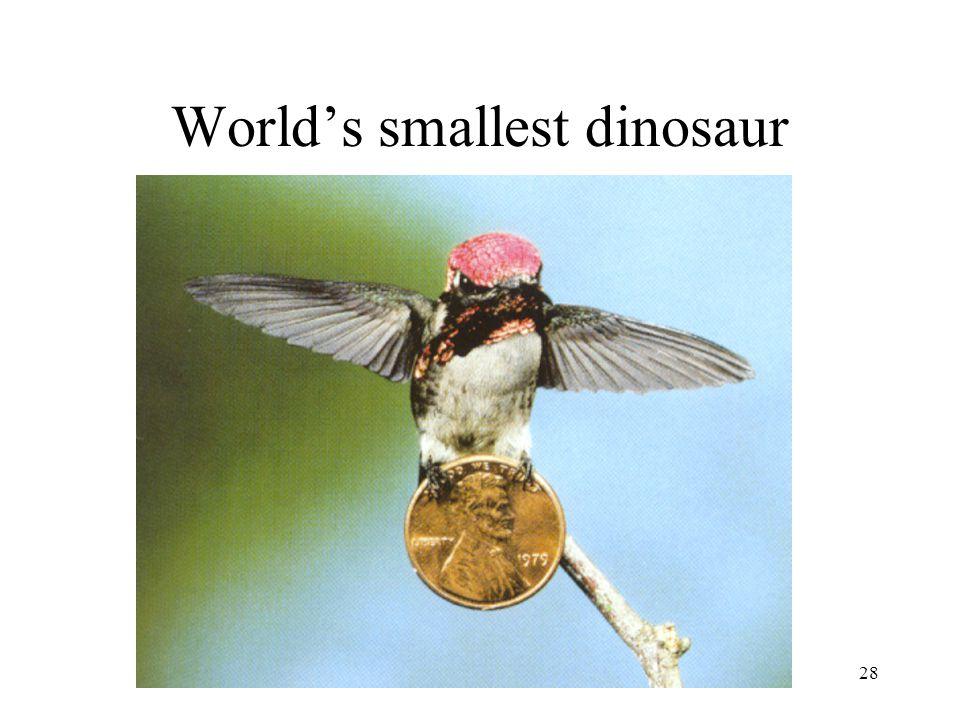 Earth History, Ch. 1628 World's smallest dinosaur