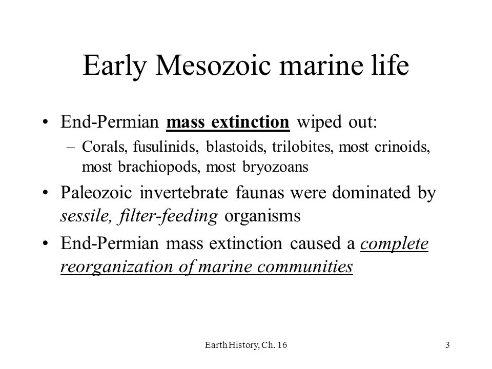 Earth History, Ch. 163 Early Mesozoic marine life End-Permian mass extinction wiped out: –Corals, fusulinids, blastoids, trilobites, most crinoids, mo