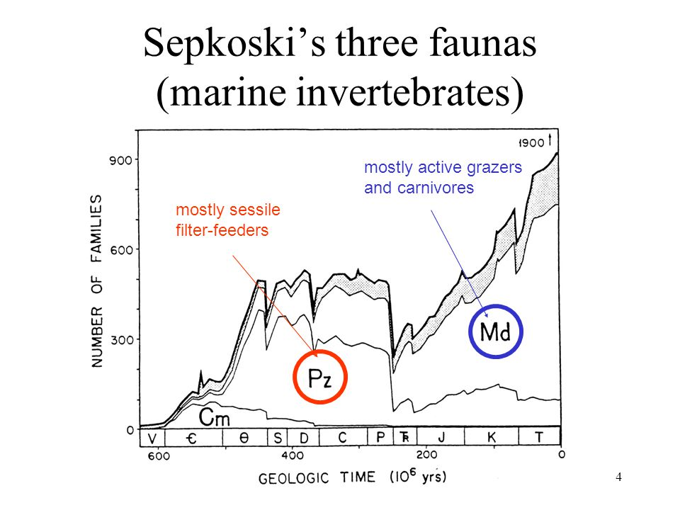 Earth History, Ch. 164 Sepkoski's three faunas (marine invertebrates) mostly sessile filter-feeders mostly active grazers and carnivores