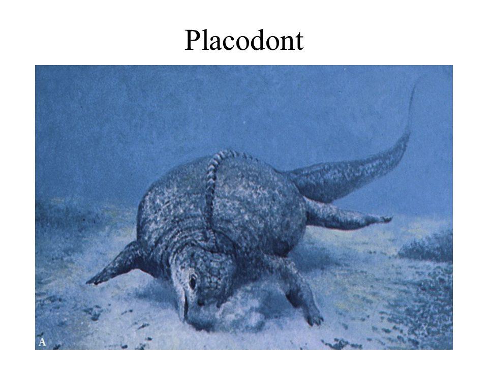 Earth History, Ch. 169 Placodont