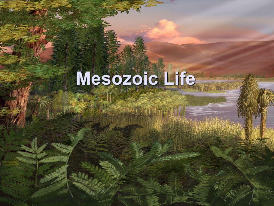 Mesozoic Life