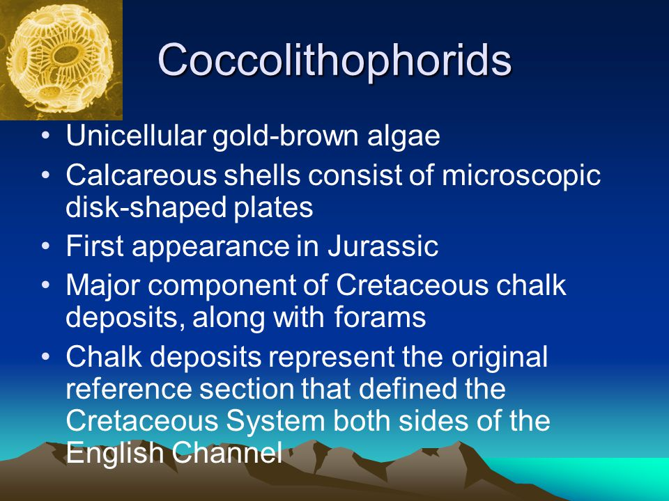 Coccolithophorids Unicellular gold-brown algae Calcareous shells consist of microscopic disk-shaped plates First appearance in Jurassic Major componen