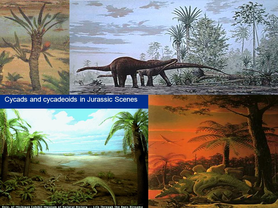 Cycads and cycadeoids in Jurassic Scenes