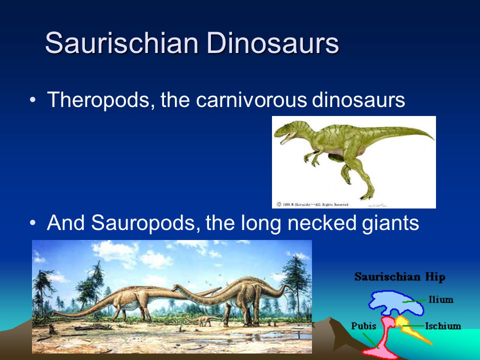 Saurischian Dinosaurs Theropods, the carnivorous dinosaurs And Sauropods, the long necked giants