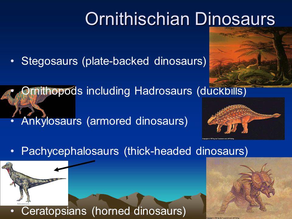 Ornithischian Dinosaurs Stegosaurs (plate-backed dinosaurs) Ornithopods including Hadrosaurs (duckbills) Ankylosaurs (armored dinosaurs) Pachycephalosaurs (thick-headed dinosaurs) Ceratopsians (horned dinosaurs)