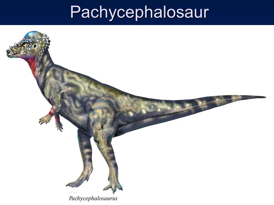 Pachycephalosaur Pachycephalosaur