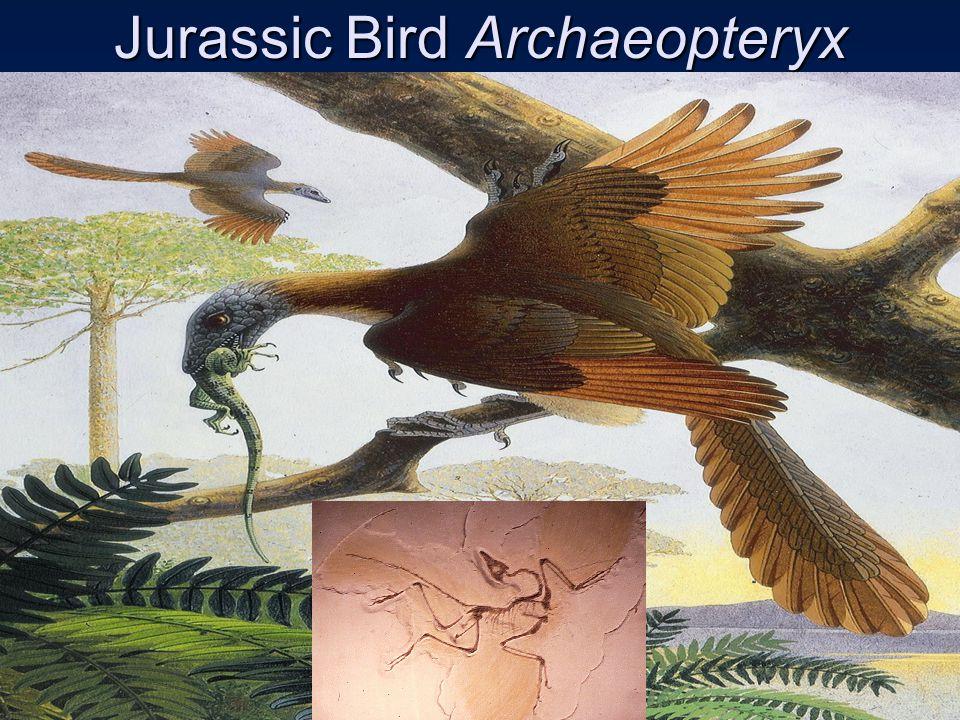 Jurassic Bird Archaeopteryx