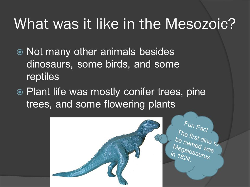 What was it like in the Mesozoic?  Not many other animals besides dinosaurs, some birds, and some reptiles  Plant life was mostly conifer trees, pin