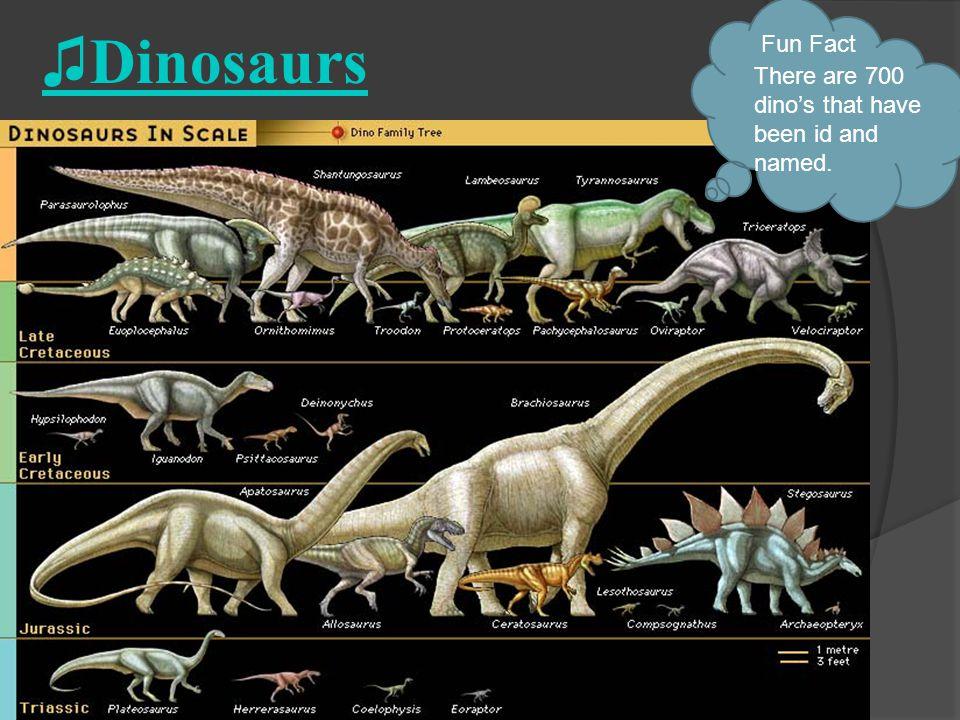 Shield Dino's Ankylosaurus Stegosaurus Fun Fact Stegosaurus had brains the size of a walnut.