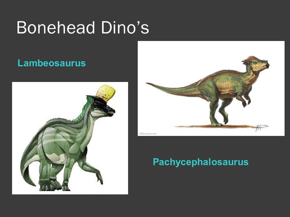 Bonehead Dino's Lambeosaurus Pachycephalosaurus