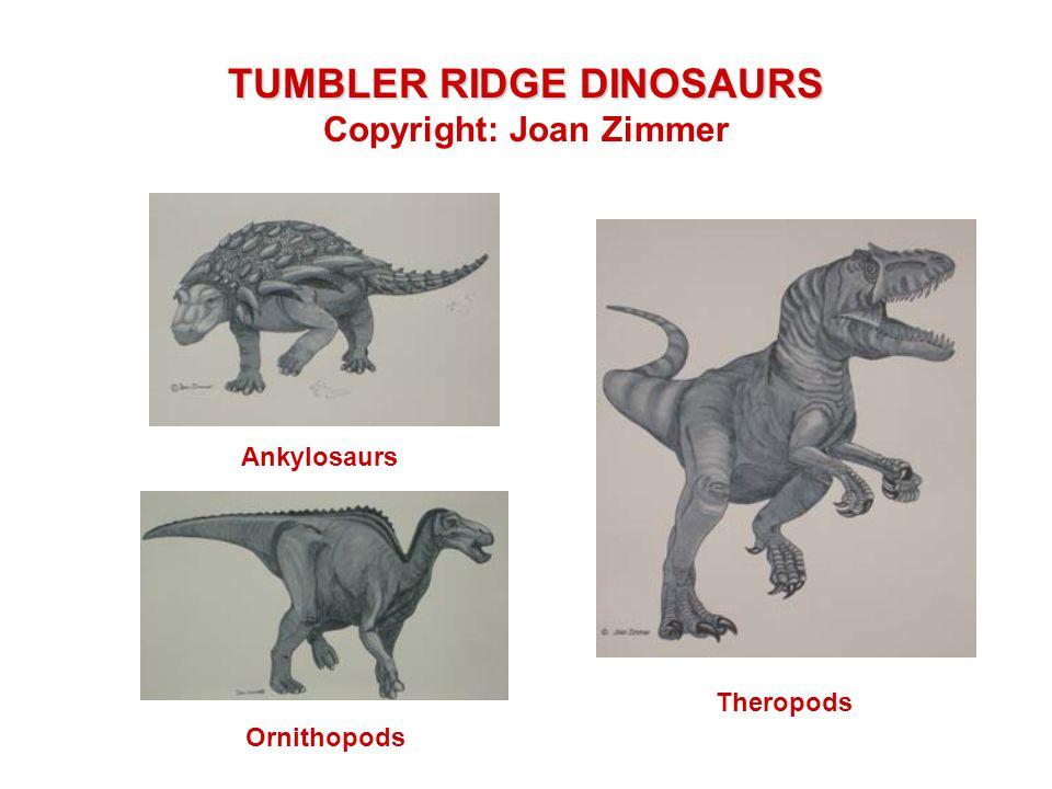 TUMBLER RIDGE DINOSAURS Copyright: Joan Zimmer Ornithopods Ankylosaurs Theropods