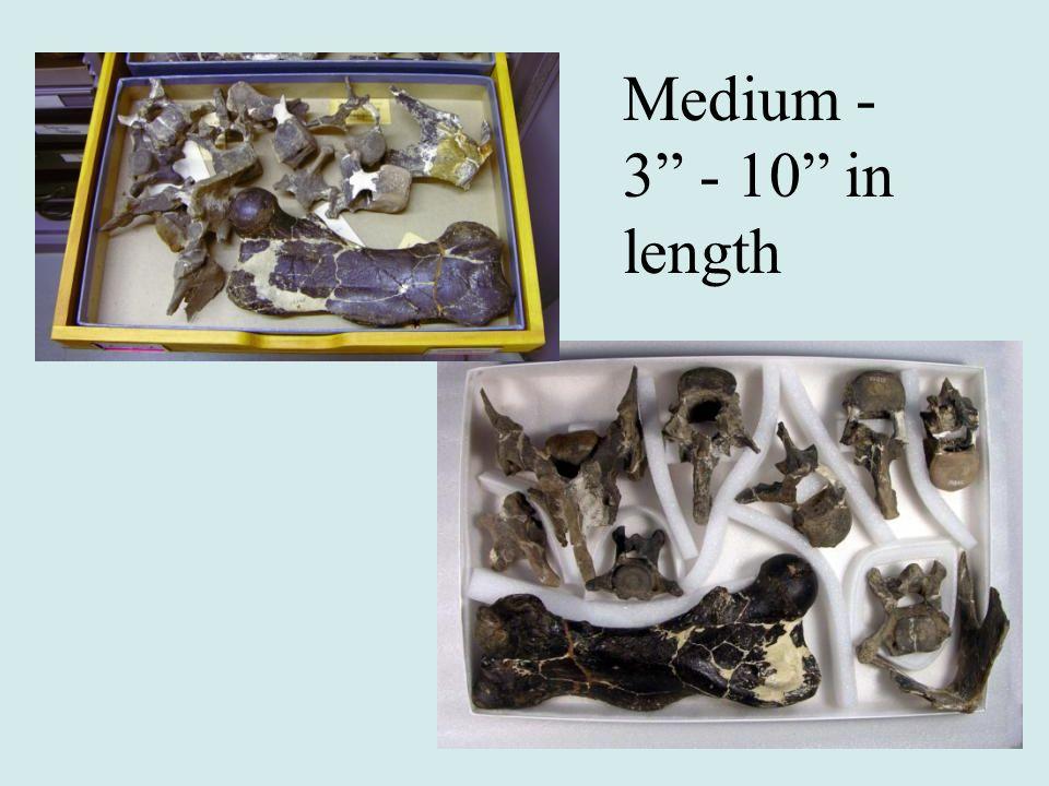Medium - 3 - 10 in length