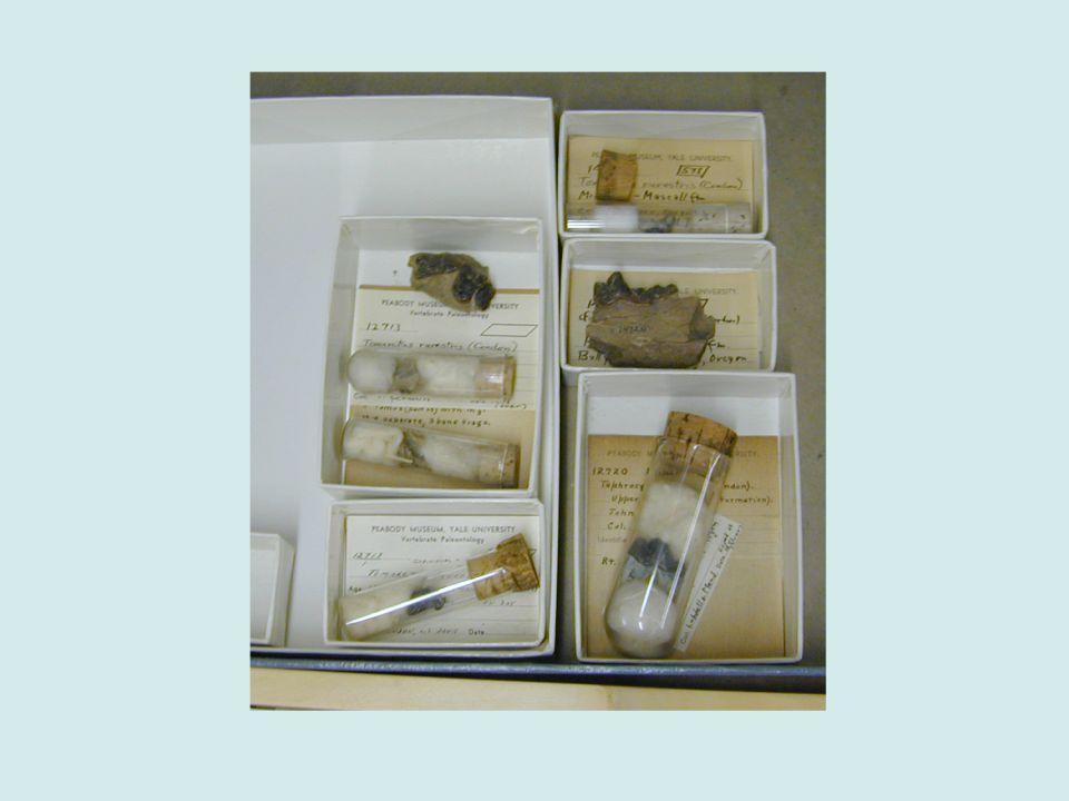 Small - small mammal or lizard jaws, small bones