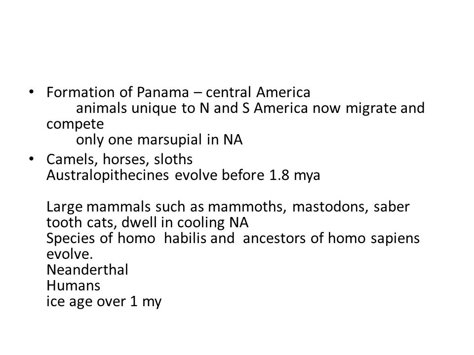 Formation of Panama – central America animals unique to N and S America now migrate and compete only one marsupial in NA Camels, horses, sloths Australopithecines evolve before 1.8 mya Large mammals such as mammoths, mastodons, saber tooth cats, dwell in cooling NA Species of homo habilis and ancestors of homo sapiens evolve.