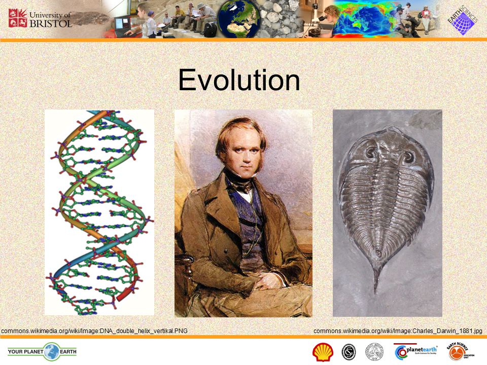 The Tree of Life en.wikipedia.org/wiki/Image:Phylogenetic_tree.svg All living things share a common ancestor.