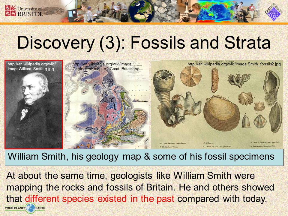 Evidence (4): Homology en.wikipedia.org/wiki/Image:Evolution_pl.png The pentadactyl limb is ancestral to all vertebrates… but modified for different uses