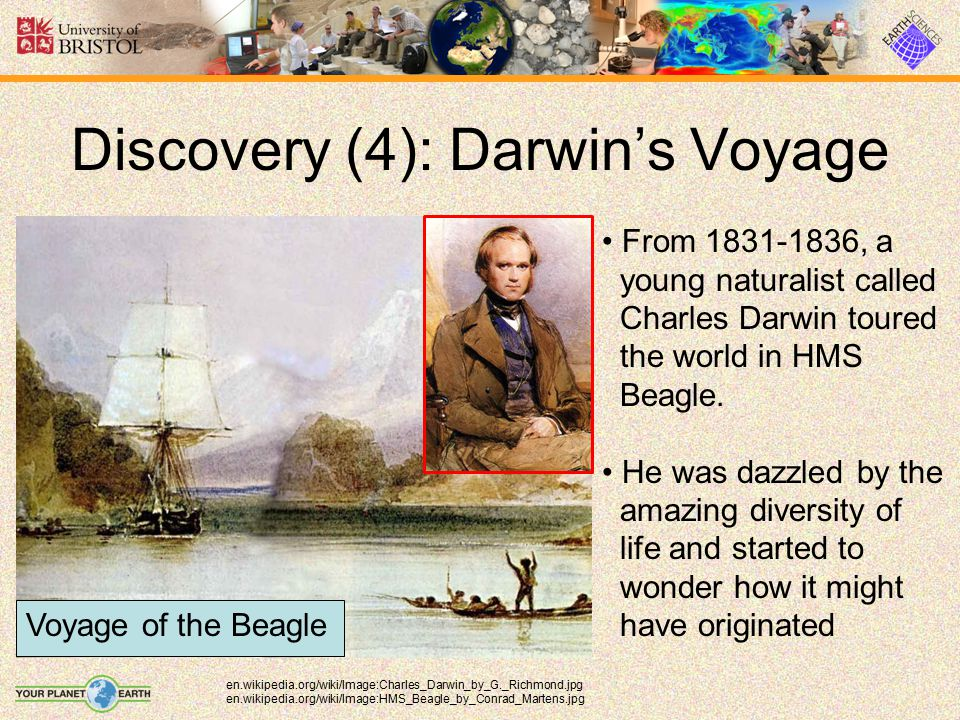 Discovery (5): Survival of the Fittest en.wikipedia.org/wiki/Image:Darwin%27s_finches.jpeg In his Origin of Species, published in 1859, Darwin proposed how one species might give rise to another.