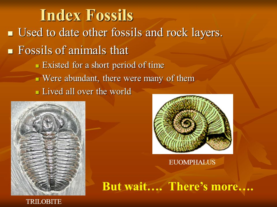 Index Fossils Used to date other fossils and rock layers.