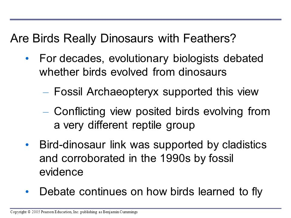 Copyright © 2005 Pearson Education, Inc. publishing as Benjamin Cummings Are Birds Really Dinosaurs with Feathers? For decades, evolutionary biologist