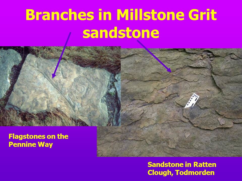 Branches in Millstone Grit sandstone Sandstone in Ratten Clough, Todmorden Flagstones on the Pennine Way