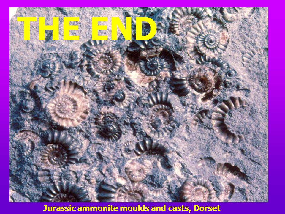 THE END Jurassic ammonite moulds and casts, Dorset