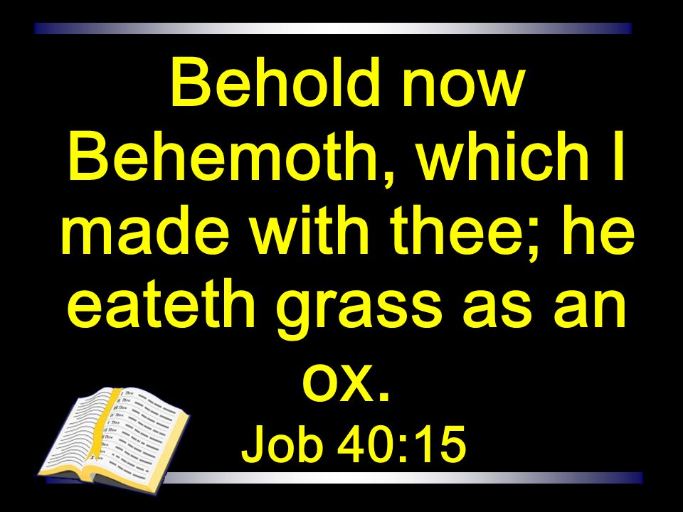 Behold now Behemoth, which I made with thee; he eateth grass as an ox. Job 40:15