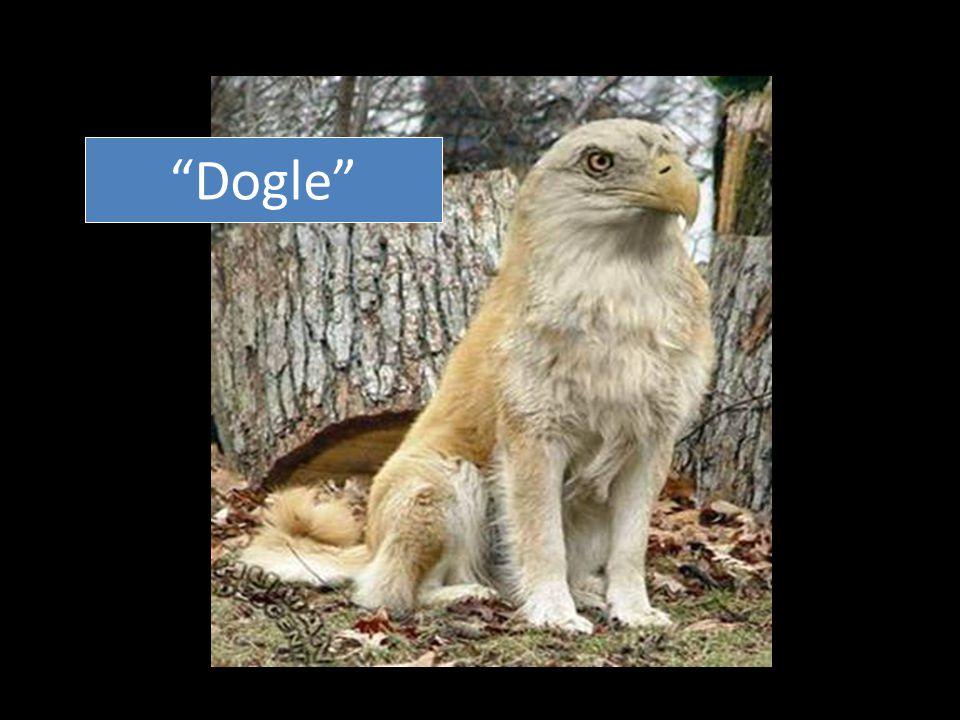 """""""Dogle"""""""